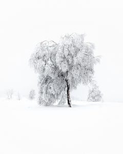 black tree on snow covered ground